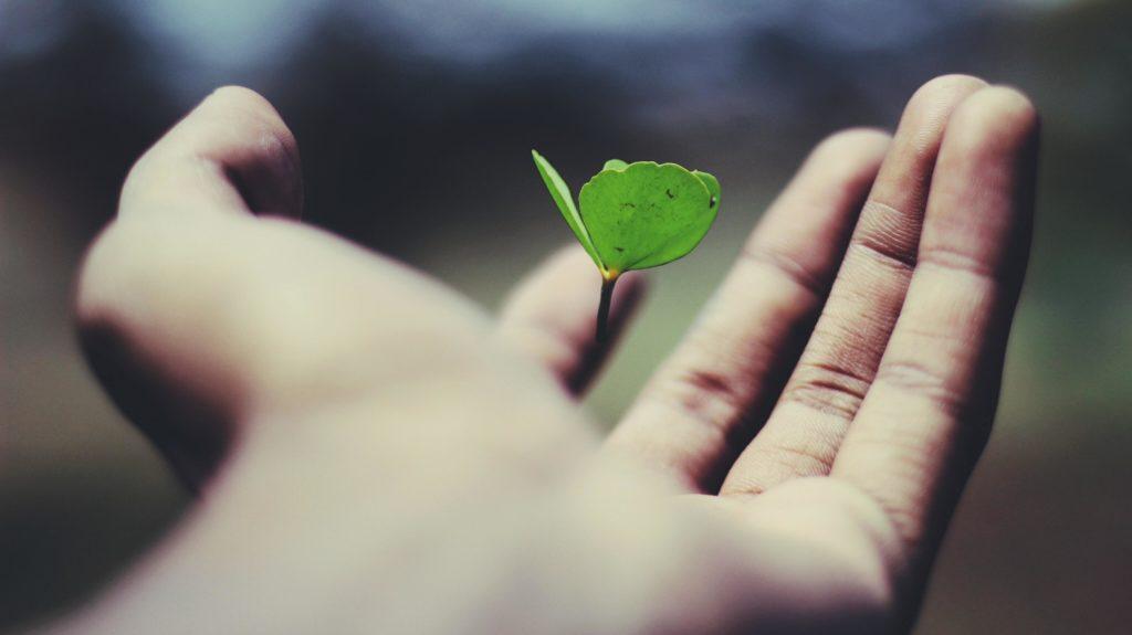 plante dans une main